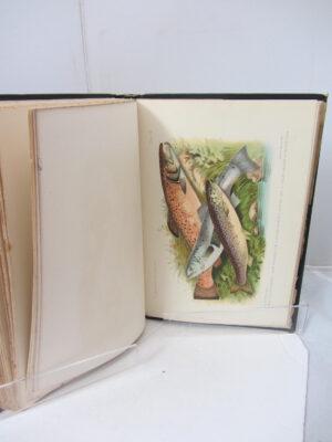 British and Irish Salmonidae. With 12 lithographed plates.  London: Williams & Northgate